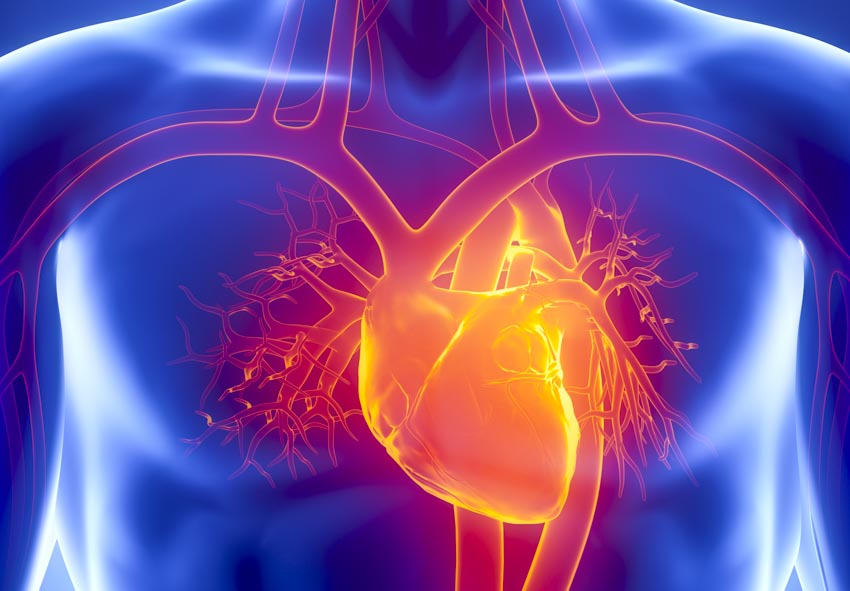 Acupuncture Prevents Heart Damage Confirmed 1 | Wang ...
