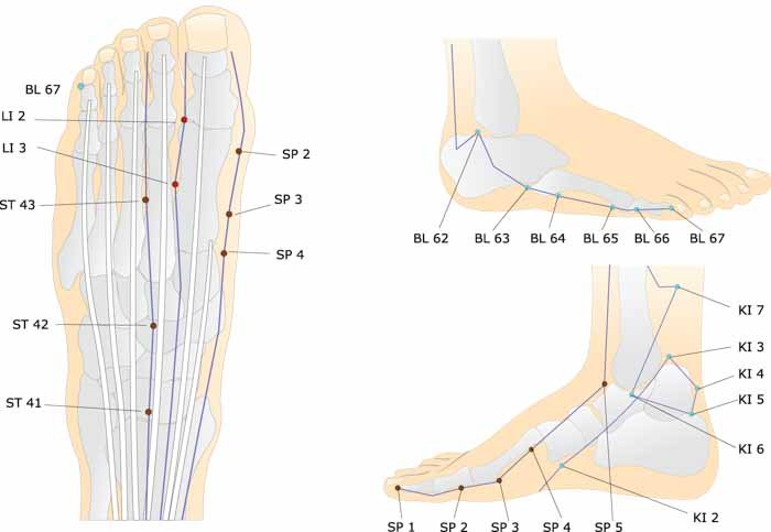 Acupoints of the foot chart