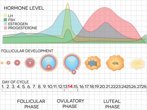 Menopause Acupuncture Course Sample Materials