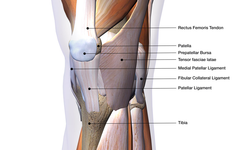 knee structure