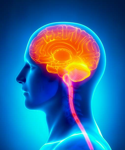 The human brain is affected by needling exteriorly.