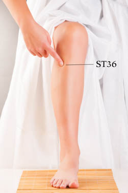 Location of ST36 at 1 cun lateral to the tibia on the lower leg.