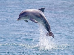 This study shows that dolphins benefit from herbal medicine.