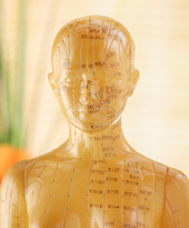 Doll with acupuncture points depicted.
