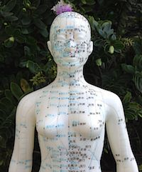 Acupuncture model fo acupoints is depicted here.